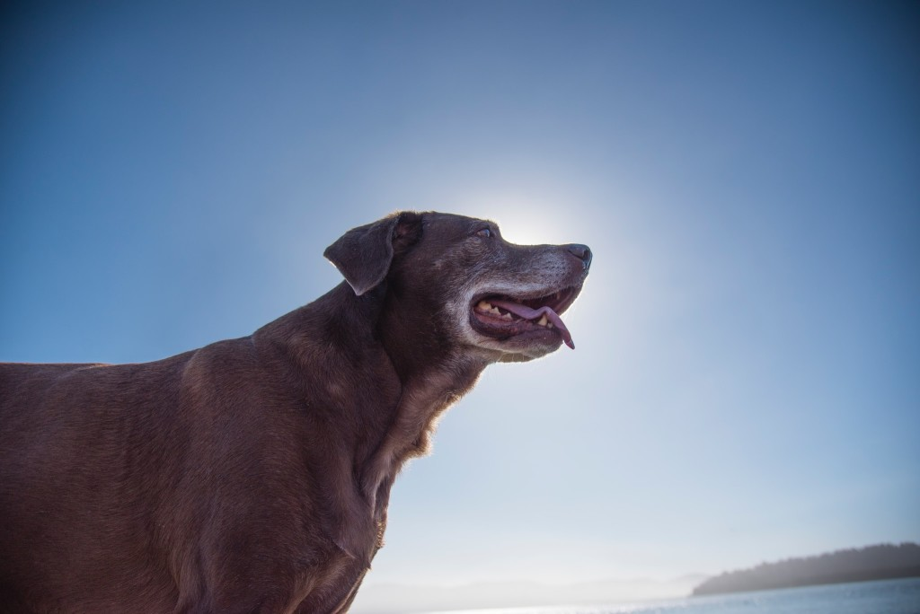 The fight against pet ageing