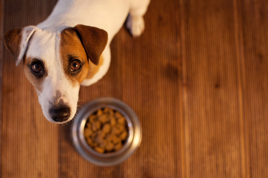 Do dogs have a strong sense of taste?